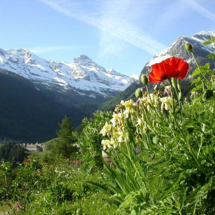 printemps chez Jeannot2-rémi